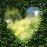 Piękny ,a także miły dla oczu zieleniec to zasługa wielu godzin spędzonych  w jego zaciszu w trakcie pielegnacji.